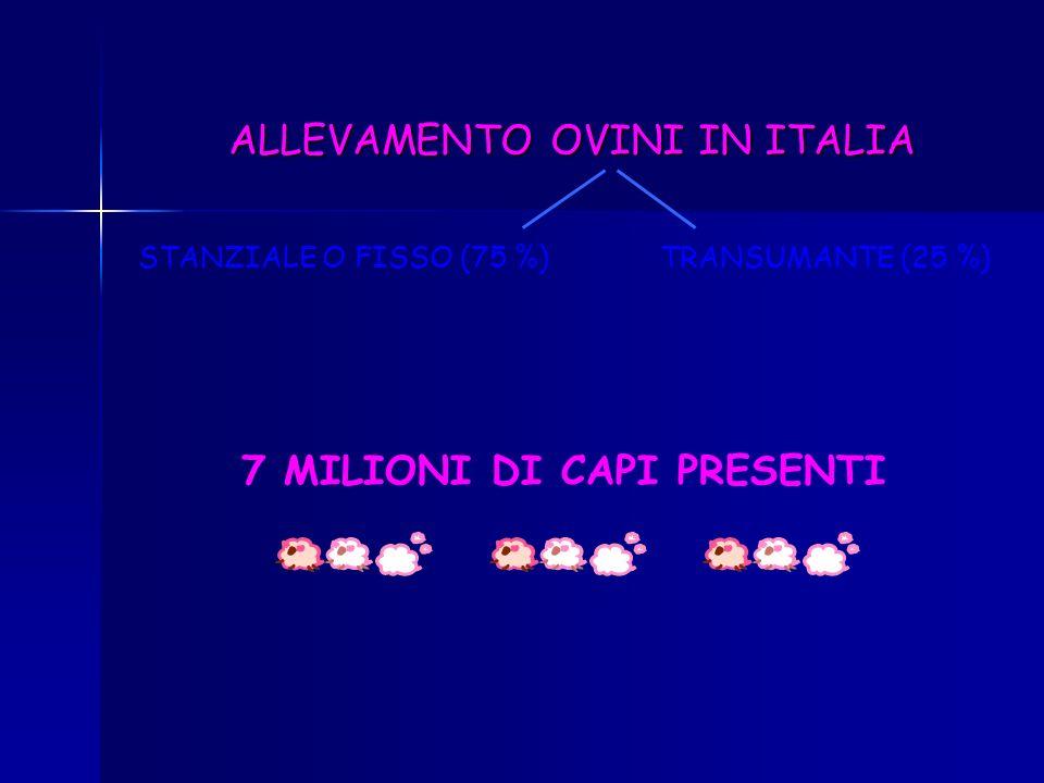 * PRODOTTA SOPRATTUTTO CON AGNELLI E CAPRETTI DA LATTE PRODOTTI OVI-CAPRINI CARNE * POCO IMPORTANTE IN ITALIA LANA