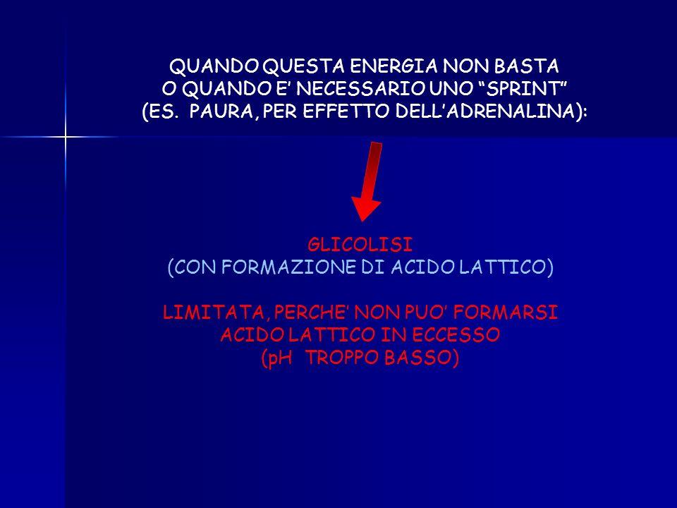 NELLANIMALE IN VIVO: FUNZIONE PRINCIPALE DEI MUSCOLI: CONTRAZIONE IN PRESENZA DI O 2 ATP ACIDI GRASSIGLUCOSIO PREMESSA ENERGIA