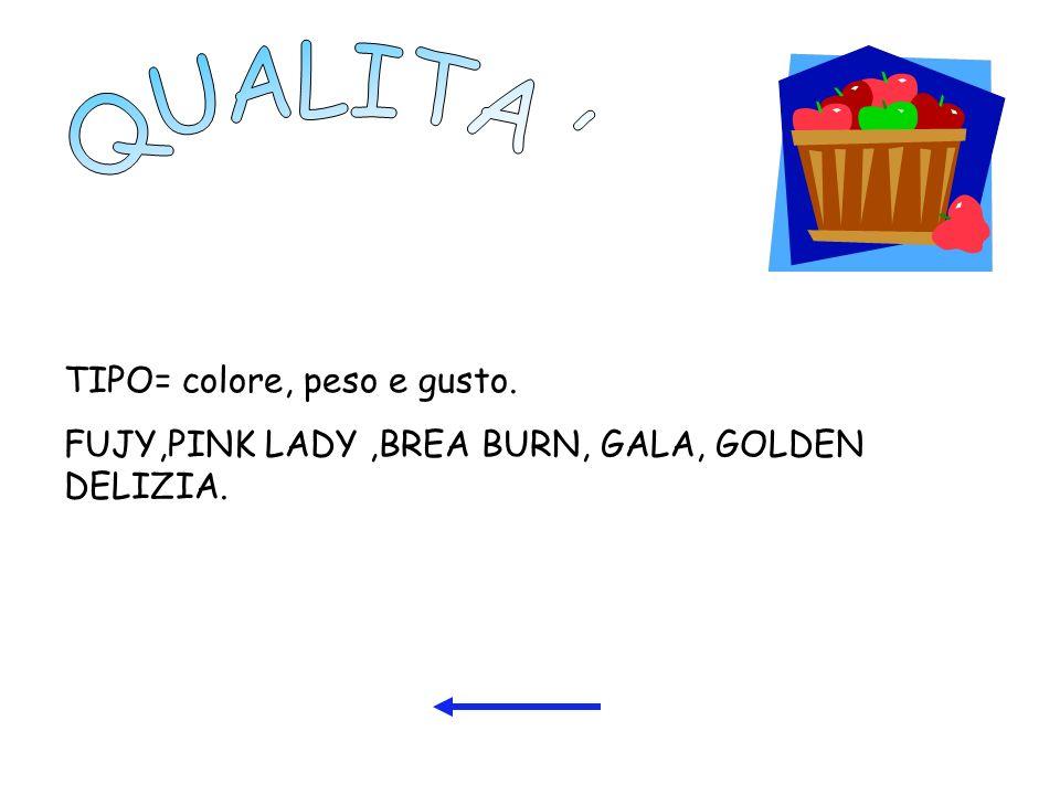 TIPO= colore, peso e gusto. FUJY,PINK LADY,BREA BURN, GALA, GOLDEN DELIZIA.