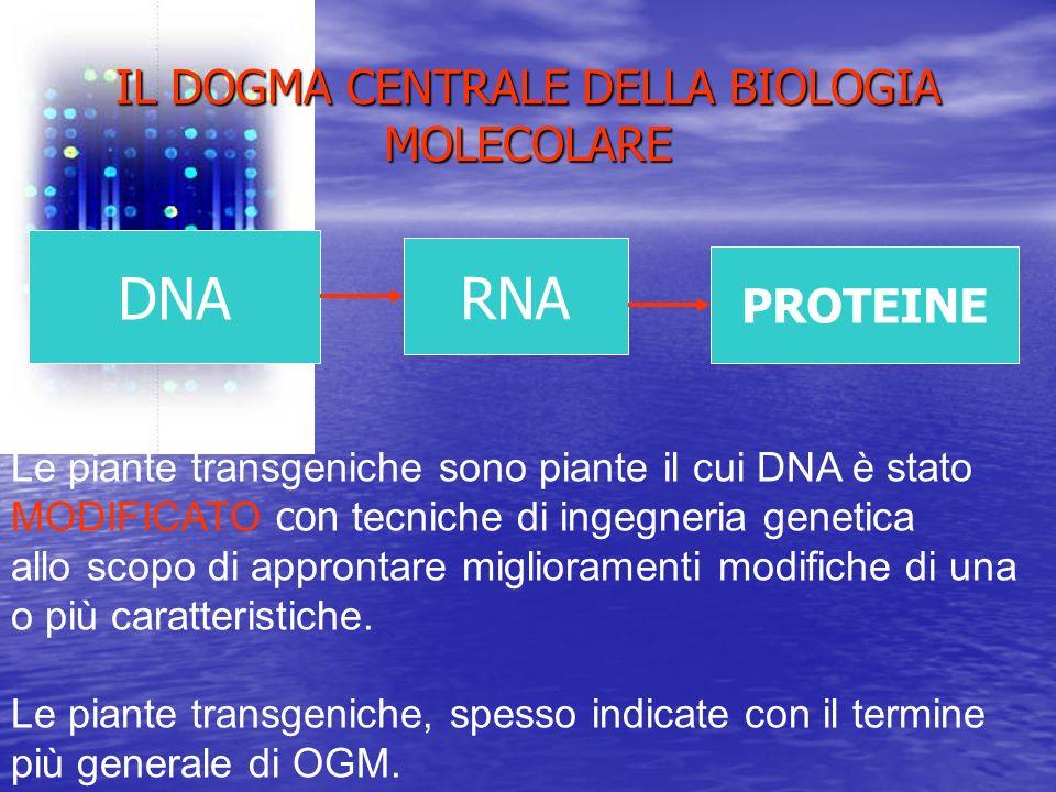 IL DOGMA CENTRALE DELLA BIOLOGIA MOLECOLARE DNA RNA PROTEINE Le piante transgeniche sono piante il cui DNA è stato MODIFICATO con tecniche di ingegner