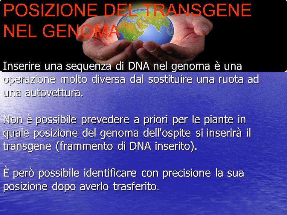 Il tratto gastroenterico è il primo targhet sul rischio OGM La presenza di tossine/allergeni con metodi chimici non è semplice.