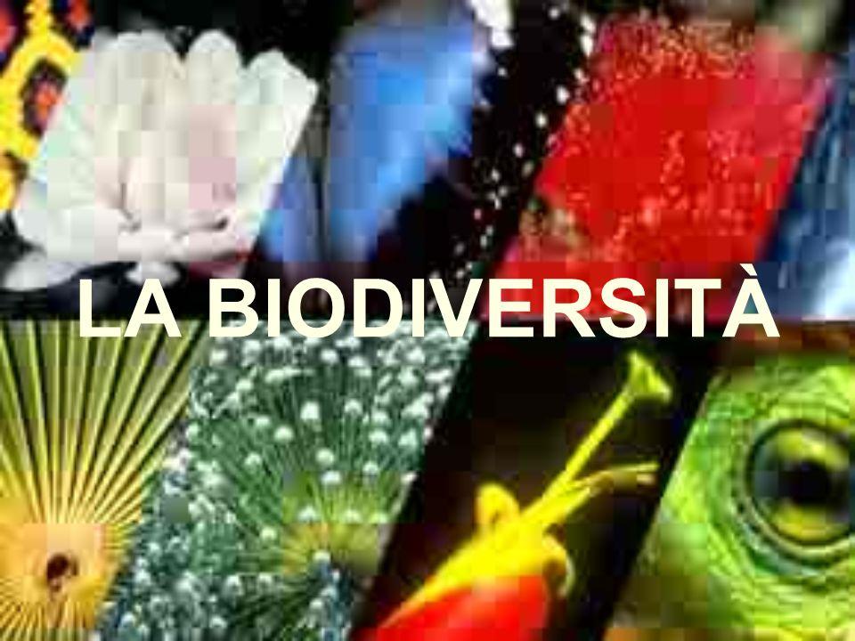 CHE COSÈ È la varietà dei geni, delle popolazioni, delle specie, delle comunità, degli ecosistemi che formano il vasto assortimento della vita In altre parole è linsieme degli organismi viventi, animali e vegetali, e degli ecosistemi dei quali fanno parte