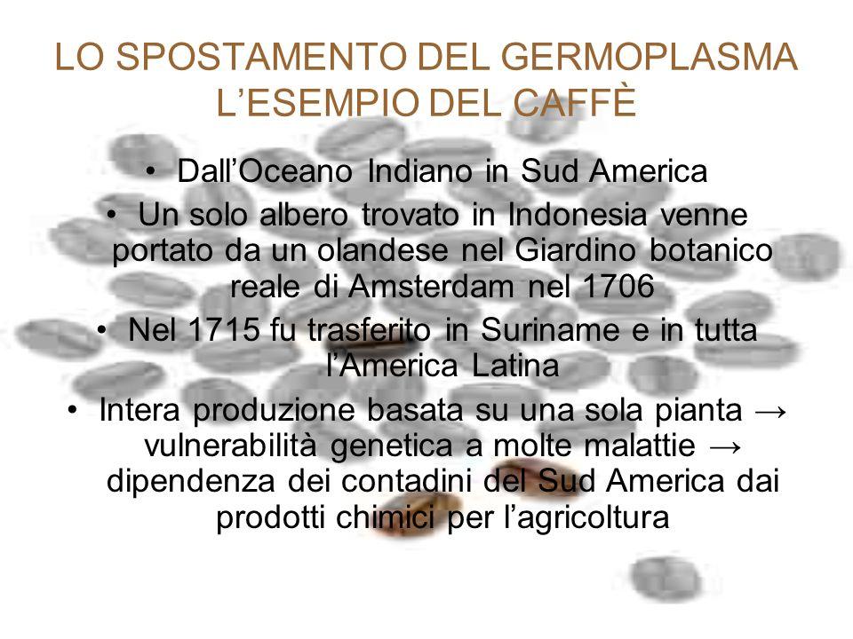 LO SPOSTAMENTO DEL GERMOPLASMA LESEMPIO DEL CAFFÈ DallOceano Indiano in Sud America Un solo albero trovato in Indonesia venne portato da un olandese n