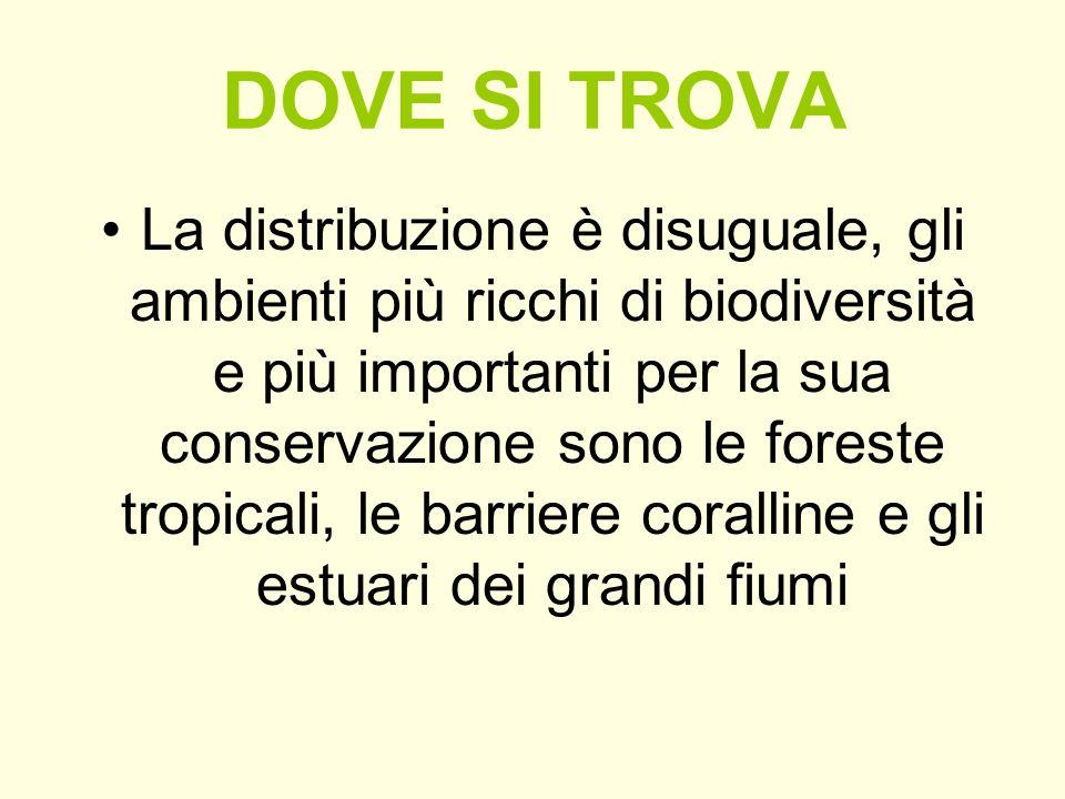 DOVE SI TROVA La distribuzione è disuguale, gli ambienti più ricchi di biodiversità e più importanti per la sua conservazione sono le foreste tropical