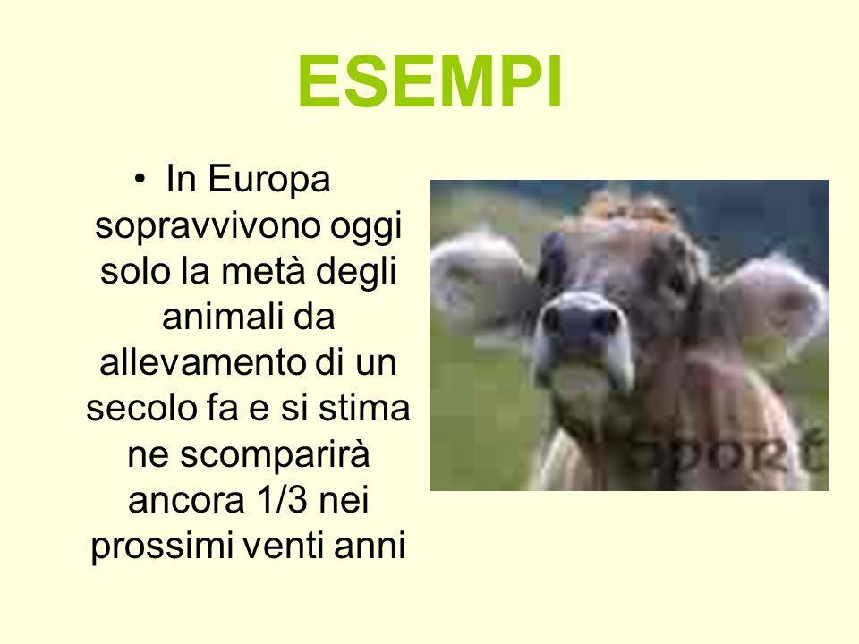 ESEMPI In Europa sopravvivono oggi solo la metà degli animali da allevamento di un secolo fa e si stima ne scomparirà ancora 1/3 nei prossimi venti an