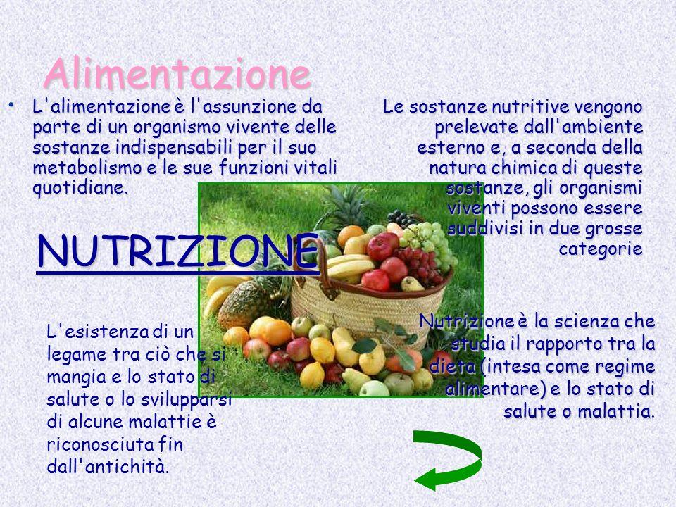 Alimentazione L'alimentazione è l'assunzione da parte di un organismo vivente delle sostanze indispensabili per il suo metabolismo e le sue funzioni v