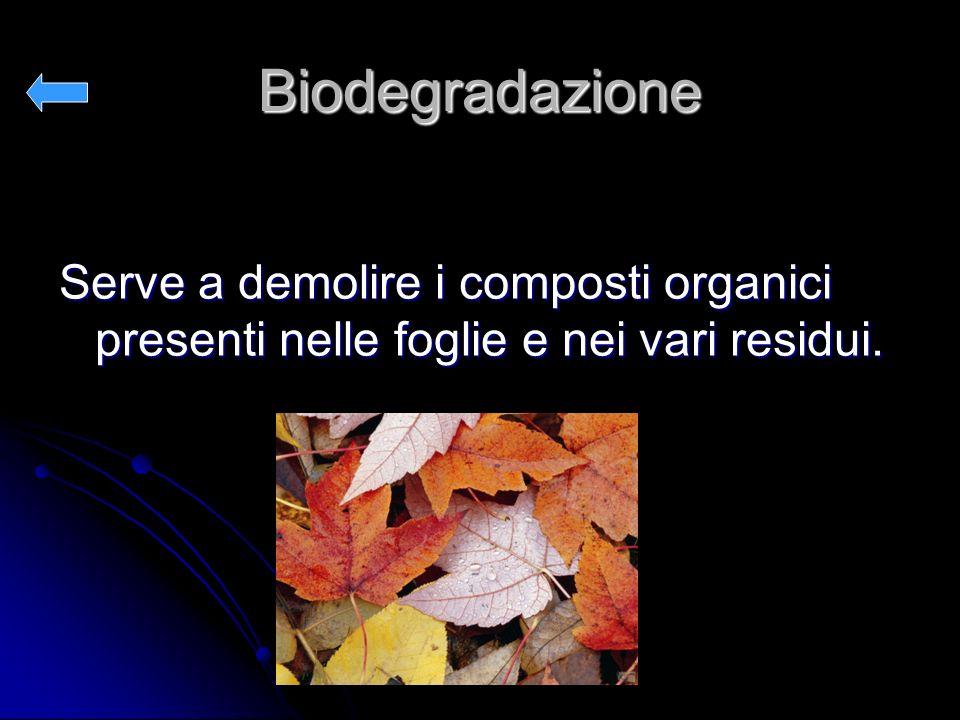 Biodegradazione Serve a demolire i composti organici presenti nelle foglie e nei vari residui.
