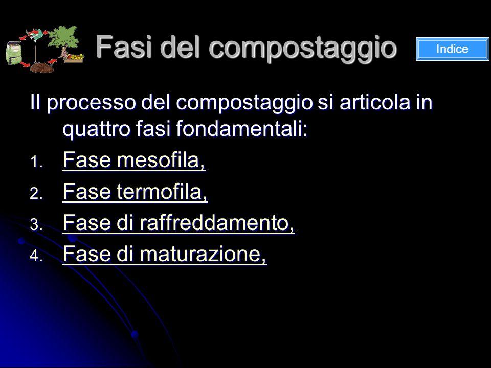 Fasi del compostaggio Il processo del compostaggio si articola in quattro fasi fondamentali: 1.