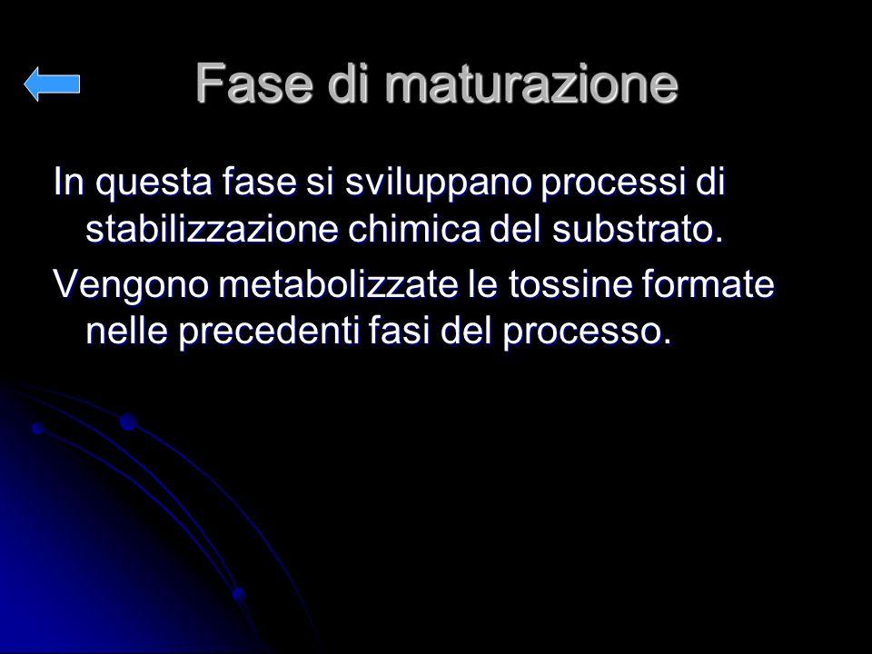 Fase di maturazione In questa fase si sviluppano processi di stabilizzazione chimica del substrato.