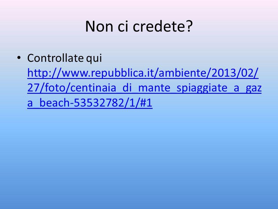 Non ci credete? Controllate qui http://www.repubblica.it/ambiente/2013/02/ 27/foto/centinaia_di_mante_spiaggiate_a_gaz a_beach-53532782/1/#1 http://ww