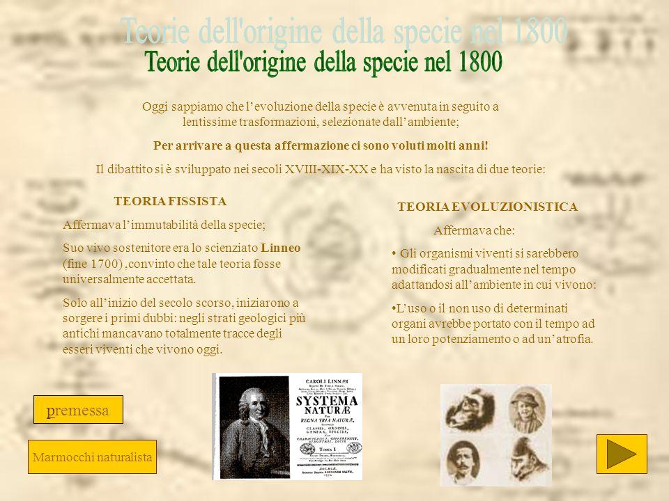TEORIA EVOLUZIONISTICA Affermava che: Gli organismi viventi si sarebbero modificati gradualmente nel tempo adattandosi allambiente in cui vivono: Luso