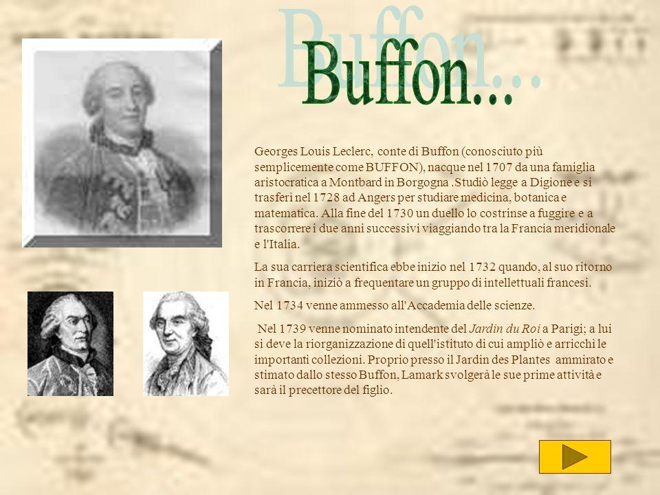 Georges Louis Leclerc, conte di Buffon (conosciuto più semplicemente come BUFFON), nacque nel 1707 da una famiglia aristocratica a Montbard in Borgogn