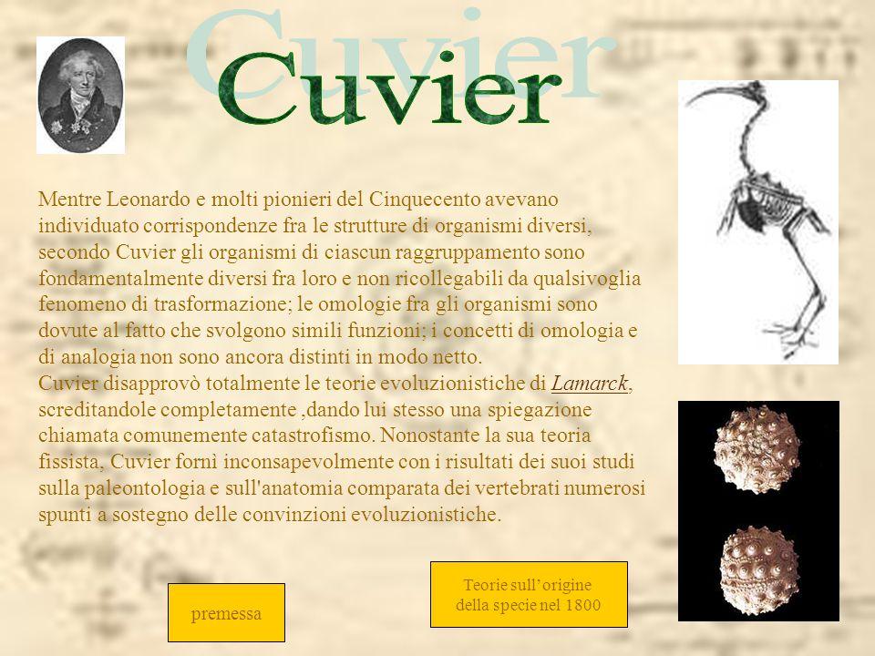 Mentre Leonardo e molti pionieri del Cinquecento avevano individuato corrispondenze fra le strutture di organismi diversi, secondo Cuvier gli organism