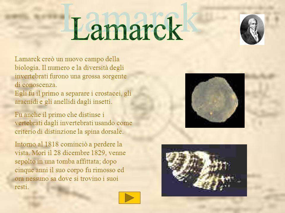 Lamarck creò un nuovo campo della biologia. Il numero e la diversità degli invertebrati furono una grossa sorgente di conoscenza. Egli fu il primo a s