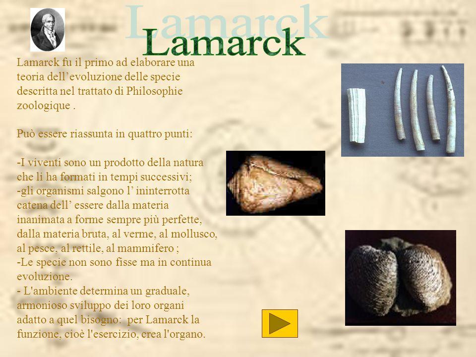 Lamarck fu il primo ad elaborare una teoria dellevoluzione delle specie descritta nel trattato di Philosophie zoologique. Può essere riassunta in quat