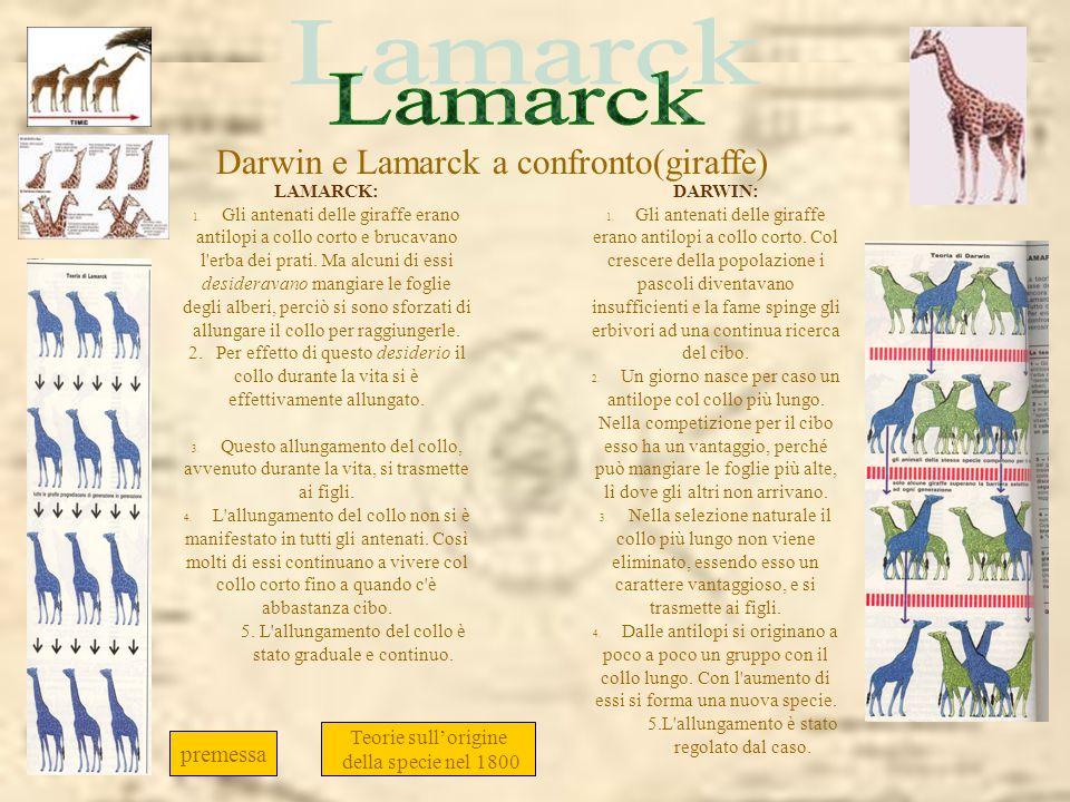 Darwin e Lamarck a confronto. LAMARCK: 1. Gli antenati delle giraffe erano antilopi a collo corto e brucavano l'erba dei prati. Ma alcuni di essi desi