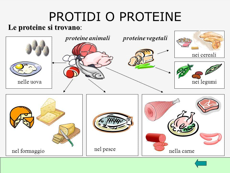 Il termine proteios in greco significa principale, che sta al primo posto, infatti quantitativamente esse formano la metà del peso del corpo animale c