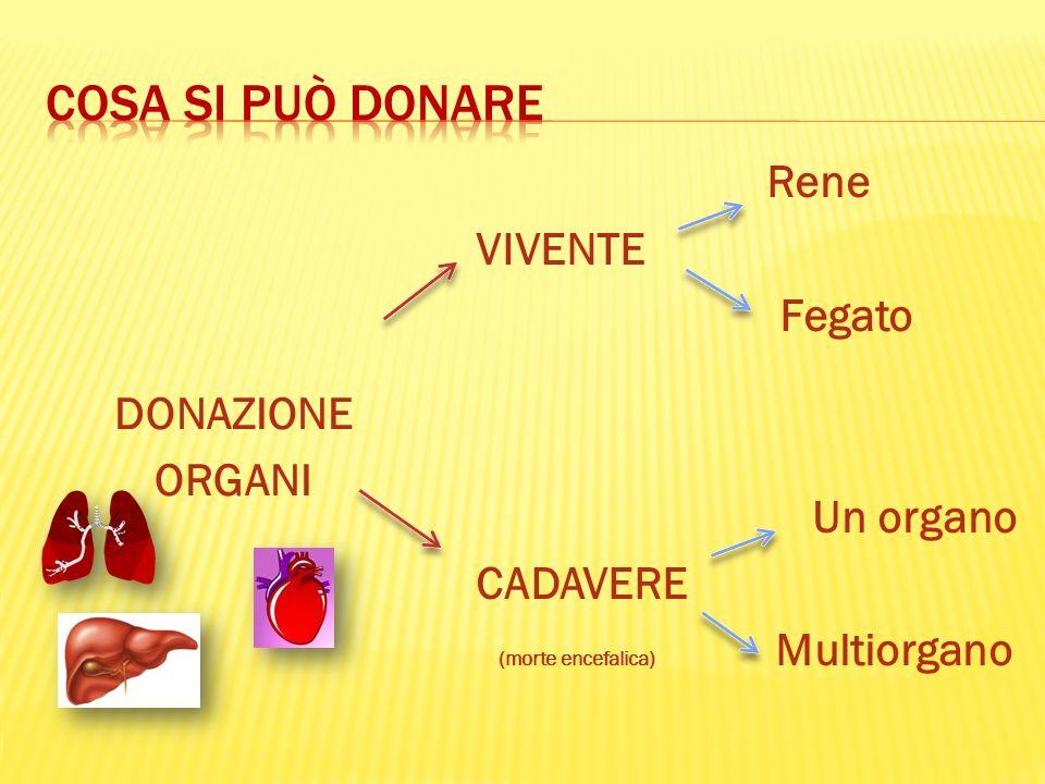 DONAZIONE ORGANI Rene VIVENTE Fegato Un organo CADAVERE (morte encefalica) Multiorgano