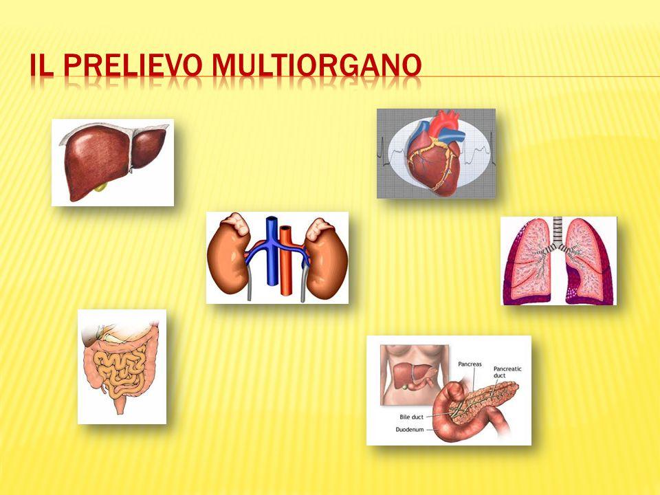 DONAZIONE DI TESSUTI VIVENTE ( tessuto osseo, placenta, midollo osseo, cordone ombellicale, vasi) CADAVERE (cornee, muscolo scheletrico, valvole cardiache, vasi, pericardio, cute)