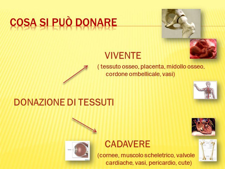 DONAZIONE DI TESSUTI VIVENTE ( tessuto osseo, placenta, midollo osseo, cordone ombellicale, vasi) CADAVERE (cornee, muscolo scheletrico, valvole cardi