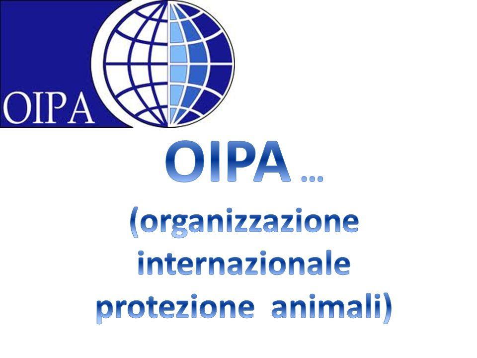 Questa organizzazione si occupa della tutela dellambiente, della protezione degli animali dai maltrattamenti : circhi, corride, feste per la vendita di animali, macelli e zoo …