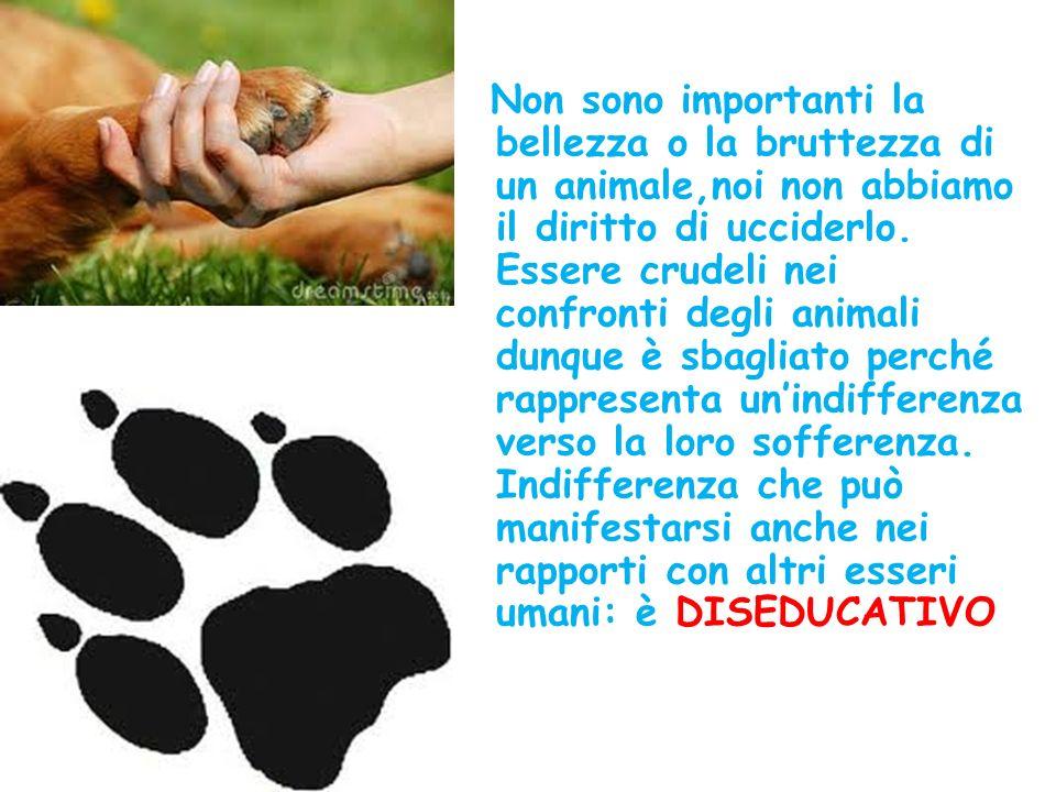 Non sono importanti la bellezza o la bruttezza di un animale,noi non abbiamo il diritto di ucciderlo.