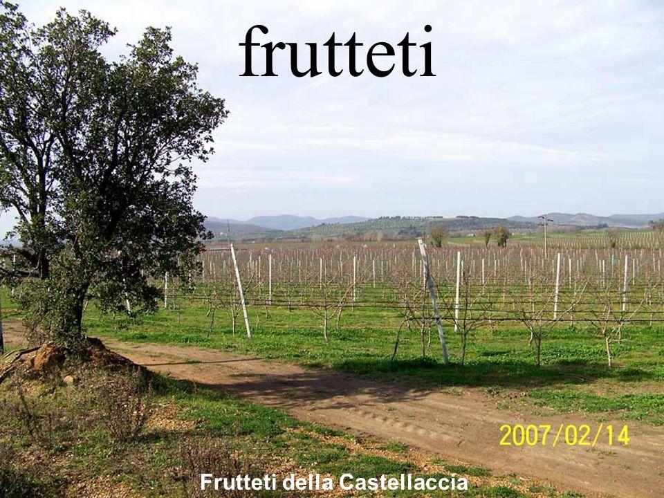 Frutteti della Castellaccia frutteti