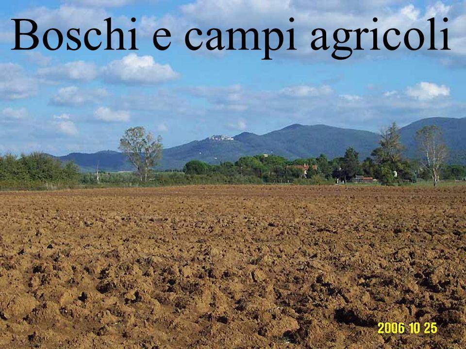 Boschi e campi agricoli