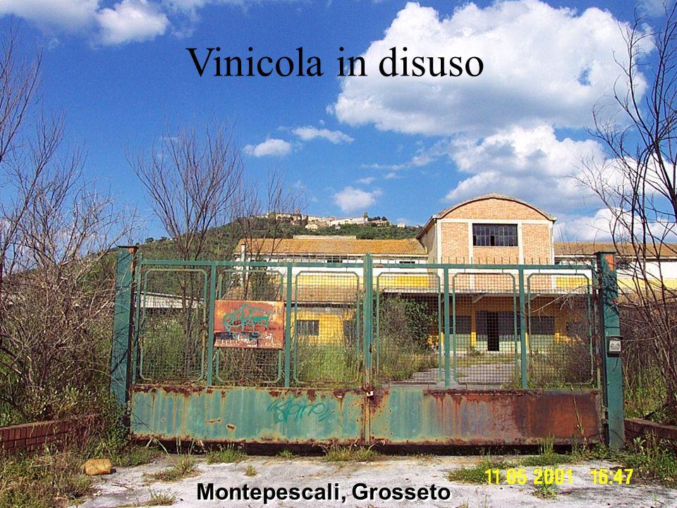 Montepescali, Grosseto Vinicola in disuso