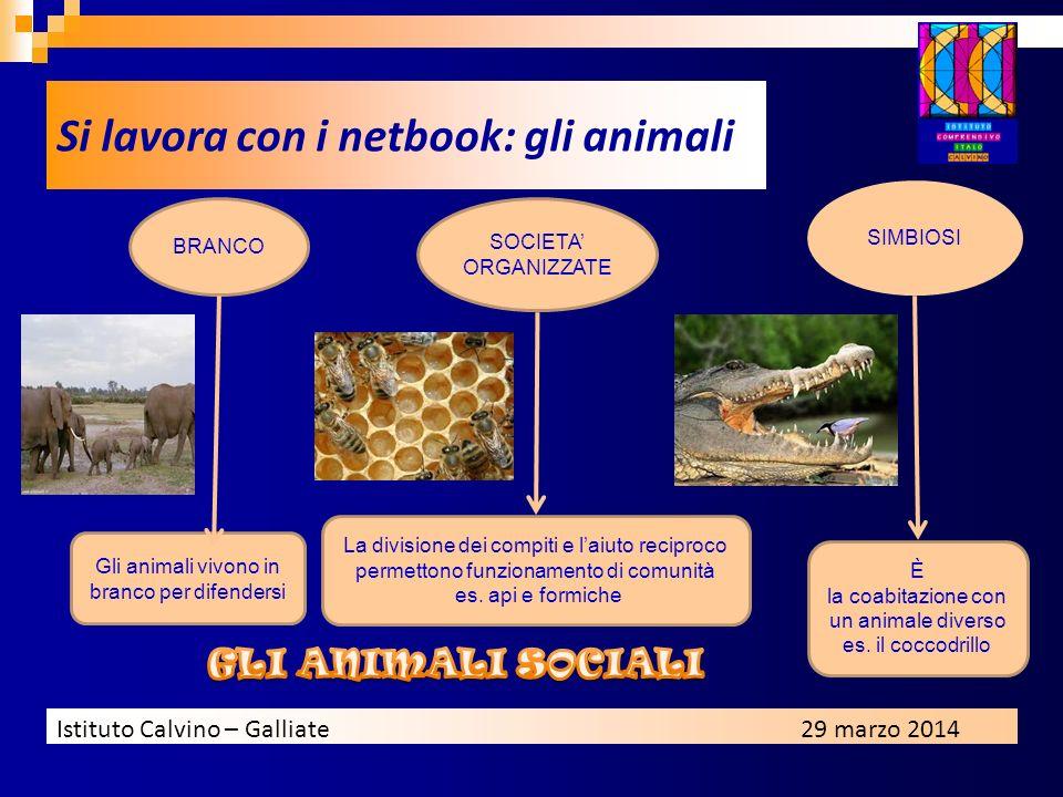 Istituto Calvino – Galliate29 marzo 2014 Gli animali vivono in branco per difendersi BRANCO SOCIETA ORGANIZZATE SIMBIOSI La divisione dei compiti e la