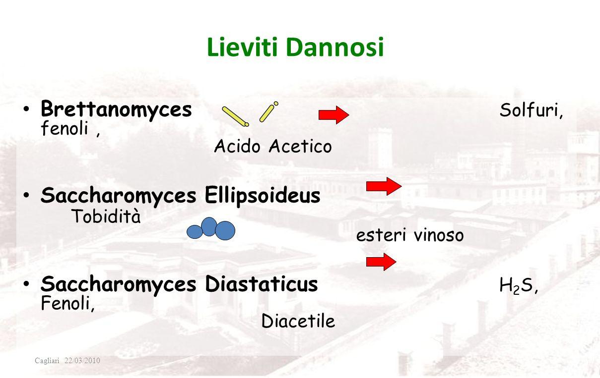 BATTERI DANNOSI rari PECTINATUS H 2 S, Solfuri MEGASPHERA acidi grassi (formaggio), H 2 S Sono Strettamente anaerobici (Assenza completa di. O 2 ) (bi