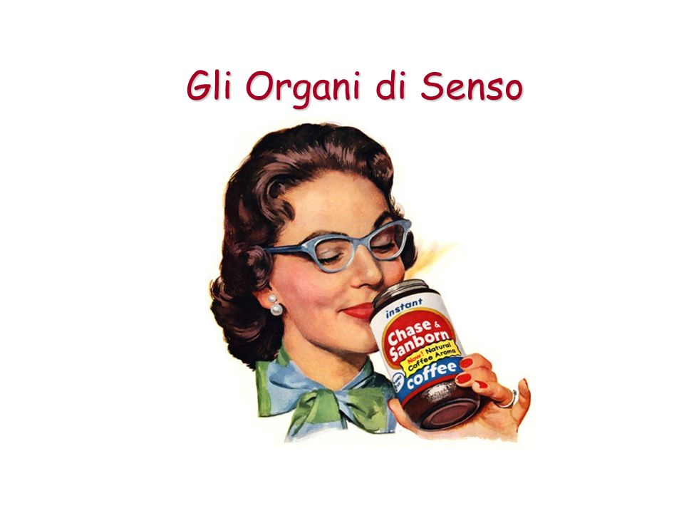 La lingua: il gusto La percezione dei sapori è affidata all organo del gusto, formato da speciali chemorecettori, le cellule gustative, raggruppate in particolari protuberanze della lingua, le papille gustative.