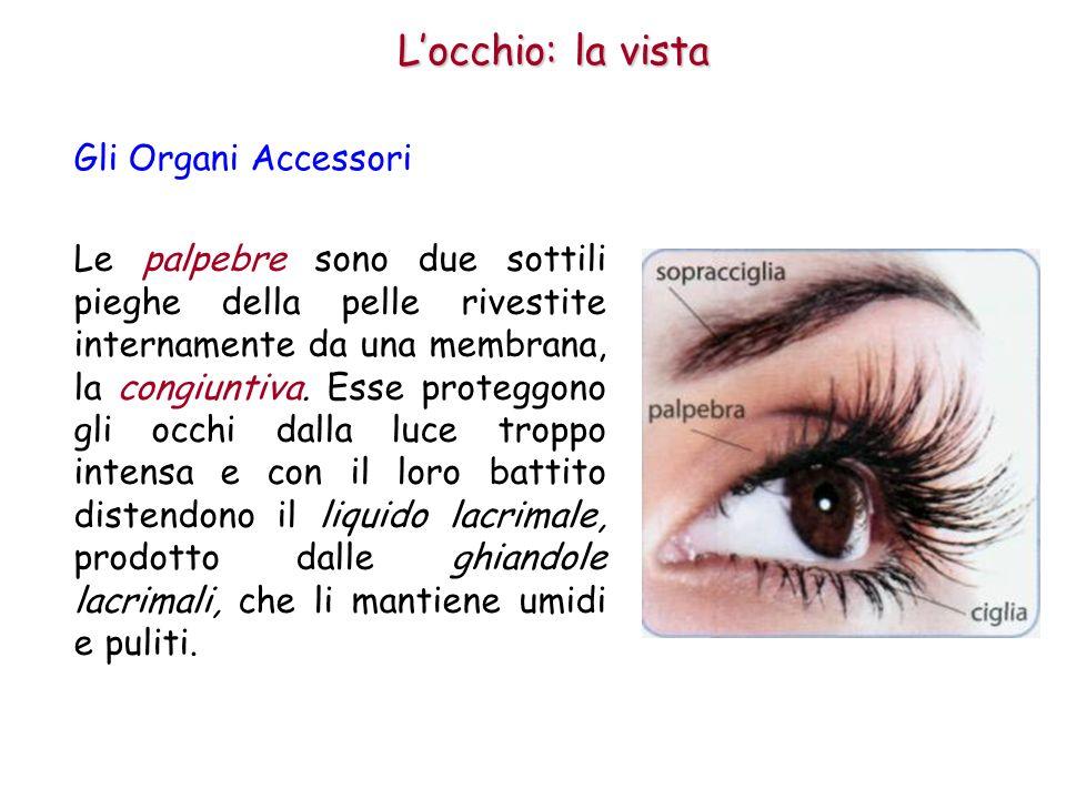 Locchio: la vista Come funziona locchio 1.La pupilla regola la quantità di luce in ingresso.