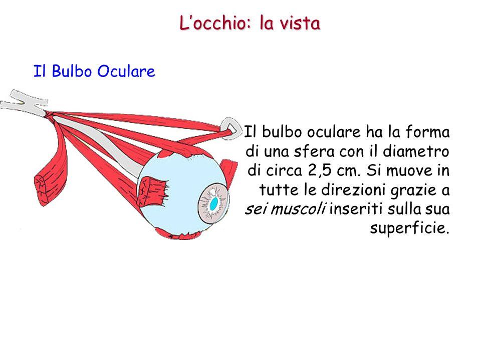 Locchio: la vista Il Bulbo Oculare La parte esterna del bulbo oculare è formata da tre membrane: la sclerotica, la coroide e la retina.