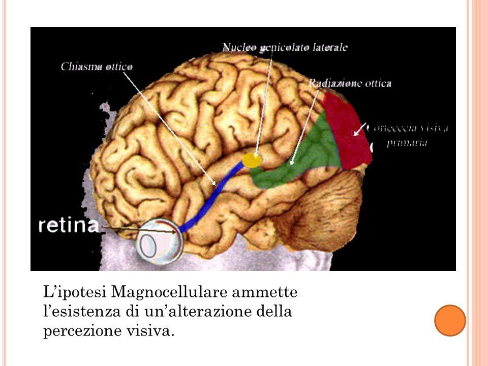 Lipotesi Magnocellulare ammette lesistenza di unalterazione della percezione visiva.