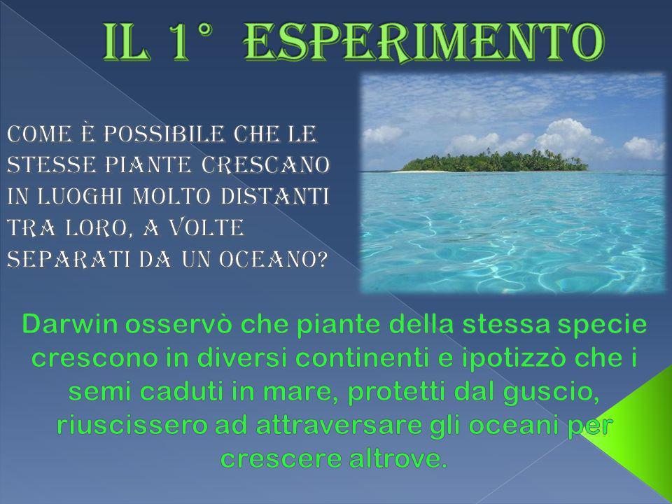 Darwin affermò: voglio dimostrare lipotesi che alcune specie vegetali possono essere trasportati dalle correnti e, per Giove, ci riuscirò!!.