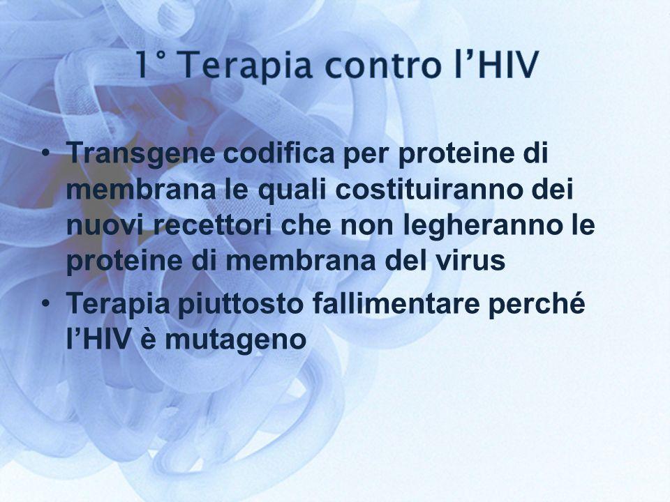 Transgene codifica per proteine di membrana le quali costituiranno dei nuovi recettori che non legheranno le proteine di membrana del virus Terapia piuttosto fallimentare perché lHIV è mutageno