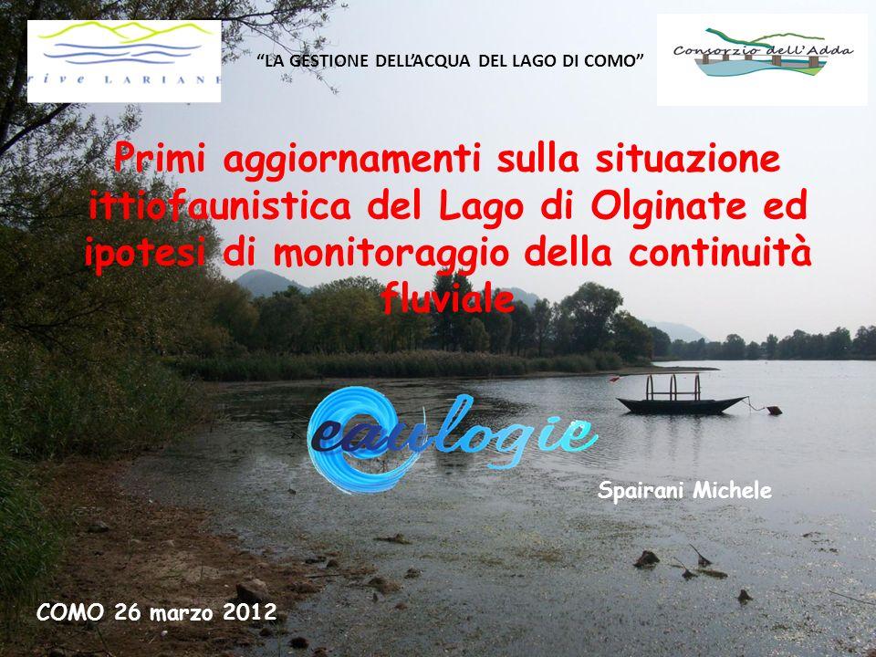LA GESTIONE DELLACQUA DEL LAGO DI COMO Primi aggiornamenti sulla situazione ittiofaunistica del Lago di Olginate ed ipotesi di monitoraggio della cont