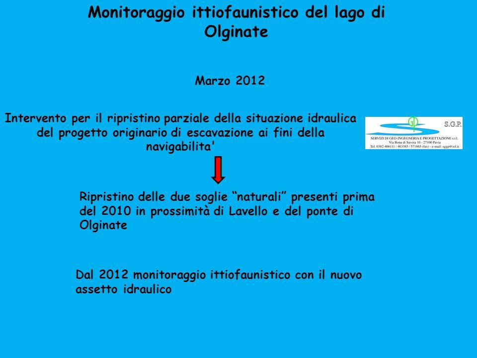 Monitoraggio ittiofaunistico del lago di Olginate Intervento per il ripristino parziale della situazione idraulica del progetto originario di escavazi