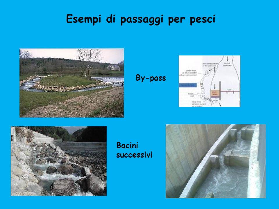 Esempi di passaggi per pesci By-pass Bacini successivi