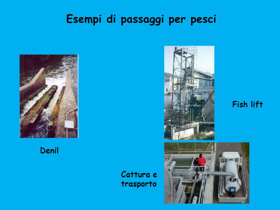 Fish lift Cattura e trasporto Denil Esempi di passaggi per pesci