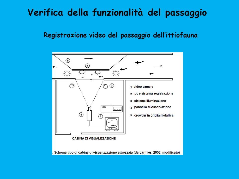 Verifica della funzionalità del passaggio Registrazione video del passaggio dellittiofauna