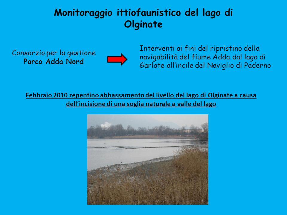 Monitoraggio ittiofaunistico del lago di Olginate Febbraio 2010 repentino abbassamento del livello del lago di Olginate a causa dellincisione di una s