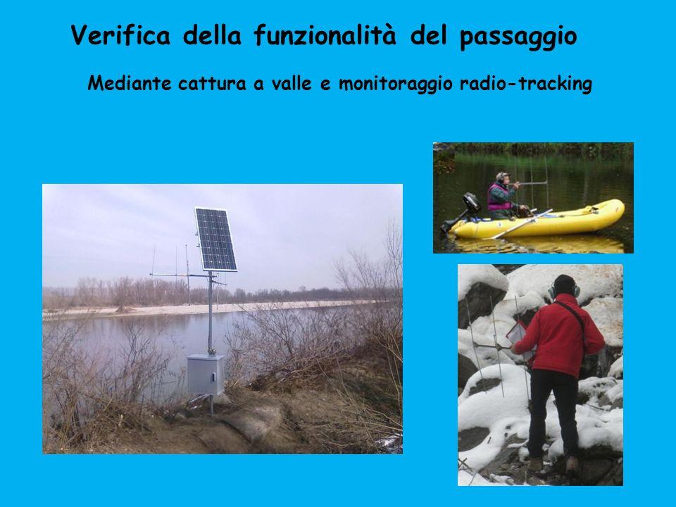 Verifica della funzionalità del passaggio Mediante cattura a valle e monitoraggio radio-tracking