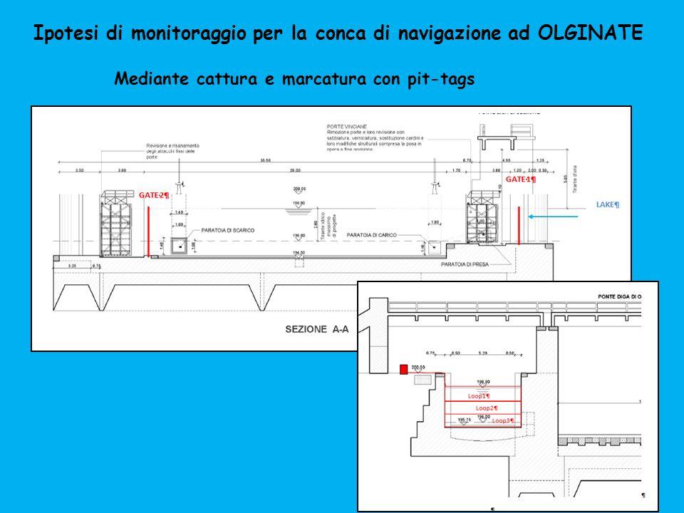 Ipotesi di monitoraggio per la conca di navigazione ad OLGINATE Mediante cattura e marcatura con pit-tags