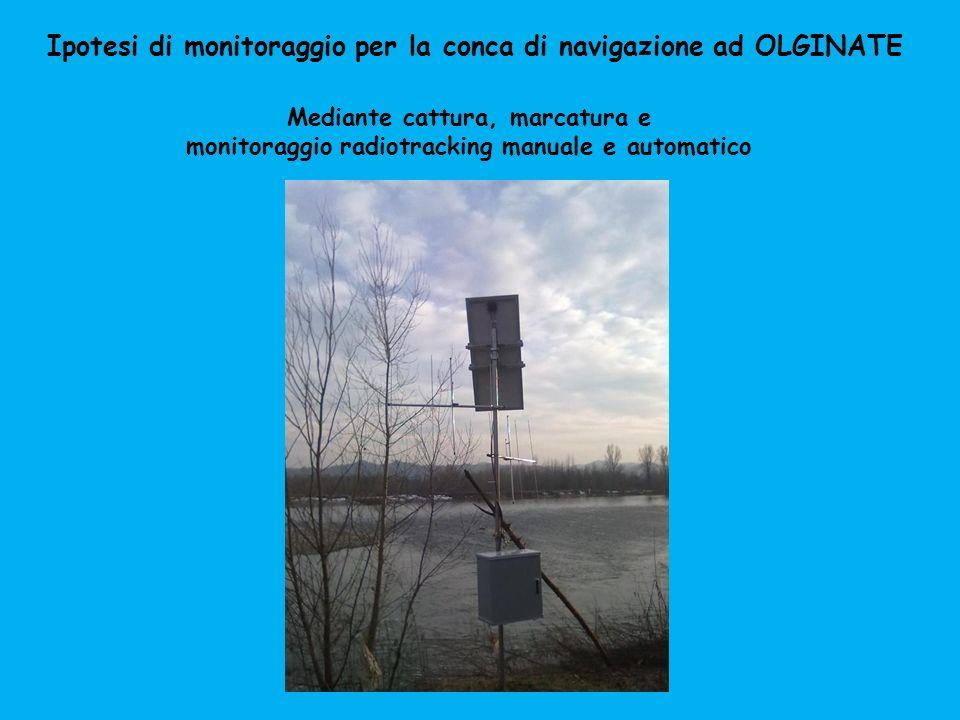 Ipotesi di monitoraggio per la conca di navigazione ad OLGINATE Mediante cattura, marcatura e monitoraggio radiotracking manuale e automatico
