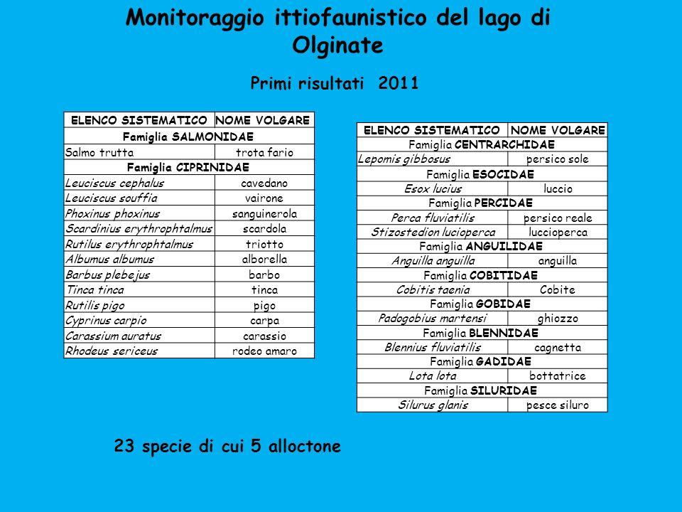 Monitoraggio ittiofaunistico del lago di Olginate Primi risultati 2011