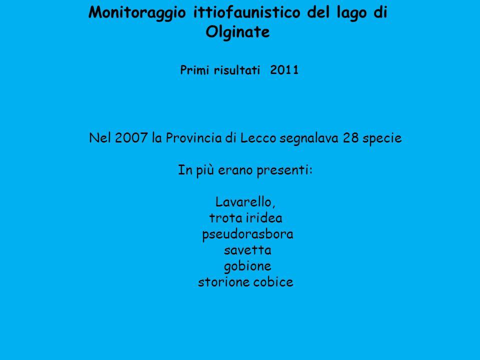Monitoraggio ittiofaunistico del lago di Olginate Primi risultati 2011 Nel 2007 la Provincia di Lecco segnalava 28 specie In più erano presenti: Lavar