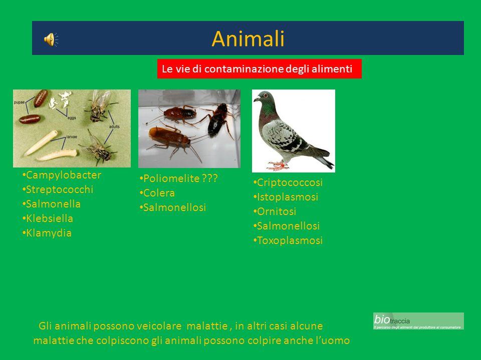 Animali Gli animali possono veicolare malattie, in altri casi alcune malattie che colpiscono gli animali possono colpire anche luomo Campylobacter Str