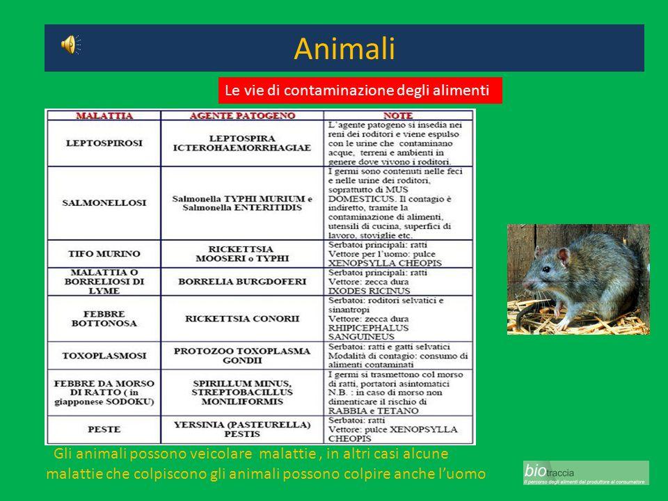 Animali Gli animali possono veicolare malattie, in altri casi alcune malattie che colpiscono gli animali possono colpire anche luomo Le vie di contami
